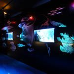 Fish Centre Interactive