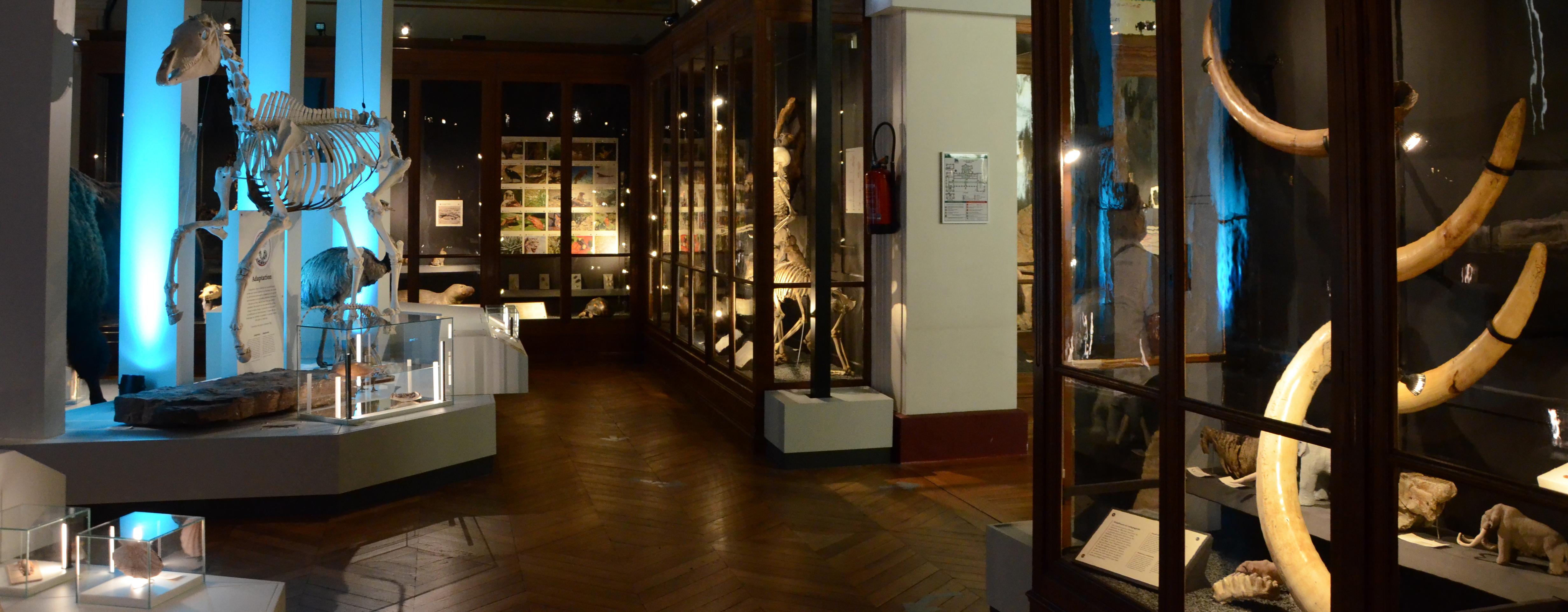 Muséum d'Histoire Naturelle de Marseille. Exposició permanent